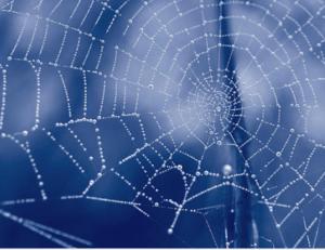 Web of delusion and non-attachment martial arts los angeles
